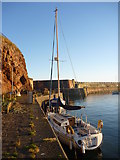 NT6779 : Coastal East Lothian : The Visitor's Berth at Victoria Harbour, Dunbar by Richard West