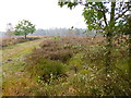 SJ9815 : Broadhurst Green, Cannock Chase by Mike Faherty