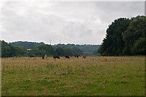 TQ4660 : Towards Knockholt  by Ian Capper