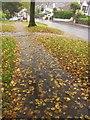 SX9065 : Fallen leaves, Old Woods Hill, Torquay by Derek Harper
