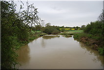 TQ0524 : River Arun by N Chadwick