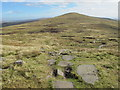 NY6933 : Crowdundle Head by Mike Quinn