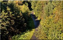 J3773 : Autumn, Comber Greenway, Belfast (2012) by Albert Bridge
