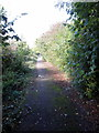 SP9131 : Cycleway to Little Brickhill by Philip Jeffrey