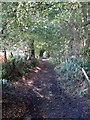 SP9130 : Greensand Ridge Walk by Philip Jeffrey
