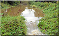 J3369 : Overflowing canal, Moreland's Meadow, Belfast by Albert Bridge