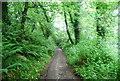SX8552 : Lapthorne Lane by N Chadwick