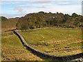 NY7968 : Hadrian's Wall, Housesteads by David Dixon