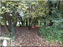 ST0207 : The Leat Walk in Cullompton by David Smith