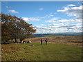 NY4822 : At the corner of Winder Plantation, Heughscar Hill by Karl and Ali