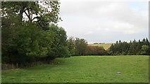 NU0440 : Field, Kyloe by Richard Webb
