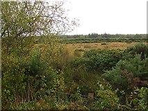 H1591 : Wetland, Corraffin by Richard Webb