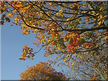 SX9065 : Autumn on Cricketfield Road, Torquay by Derek Harper