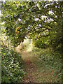 TM3863 : Footpath to North Entrance by Adrian Cable