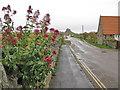 NU1241 : Road to Lindisfarne Castle by Pauline E