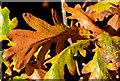 J2765 : Autumn leaves, Lambeg/Hilden by Albert Bridge
