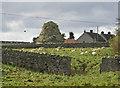 NU1834 : Dovecote, Bamburgh by Pauline E