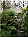 NS1385 : Victorian Fernery, Benmore Botanic Gardens by James T M Towill