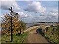 TQ5378 : Thames Path near Crayford Ness by David Anstiss