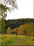 TQ1752 : View downhill towards Headley Lane by Stefan Czapski