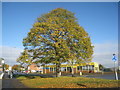 SE8911 : Normanby Road in autumn by Jonathan Thacker