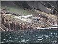 NA7245 : Flannan Isles: seals on Sgeir Toman by Chris Downer