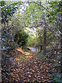 TM3674 : Footpath to Bramfield Road by Adrian Cable