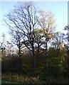 NY5661 : Miltonrigg Wood by JThomas