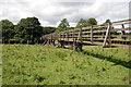 NT9503 : Footbridge over the River Coquet by John Sparshatt