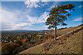 TQ2452 : Colley Hill scarp by Ian Capper