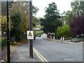 TQ3097 : Low trees on Hadley Road by Robin Webster