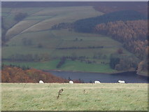 SK1887 : Sheep on Crook Hill and the upper Derwent valley by Andrew Hill