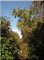 SX9066 : Path onto Barton tip by Derek Harper