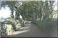 SW7228 : Wooded lane southeast of Carwythenack by Stuart Logan
