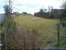 H5575 : Sheep, Altdrumman by Kenneth  Allen