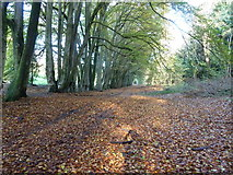 SU8213 : Bridleway 479 to Chilgrove by Dave Spicer
