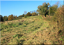 ST6838 : 2012 : Rough grazing west of Batcombe by Maurice Pullin