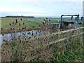 TL3199 : Bird watching at Eldernell - The Nene Washes by Richard Humphrey