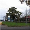 SP3177 : Oak, Fletchamstead Highway by E Gammie