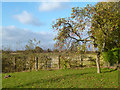 SP6006 : Apple Tree in Holton by Des Blenkinsopp