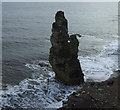 NZ4348 : Stack near Nose's Point by JThomas