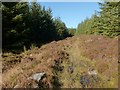 NS2885 : Path through woodland clearing by Lairich Rig