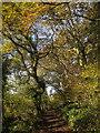 SX7367 : Path, Hembury Woods by Derek Harper