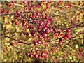 SP9314 : Haws by Rob Farrow