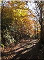 SX7268 : Path, Hembury Woods by Derek Harper