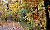J3472 : Autumn path, Ormeau Park, Belfast (2012-2) by Albert Bridge