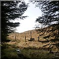 NT1706 : Emerging from the forest, Ettrick Head by Alan O'Dowd