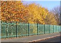 SO9296 : Autumn School Trees by Gordon Griffiths