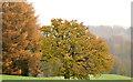 J3269 : Autumn trees, Barnett Demesne, Belfast (3) by Albert Bridge