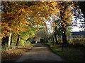 SE2769 : Autumnal  scene  Studley  Royal by Martin Dawes
